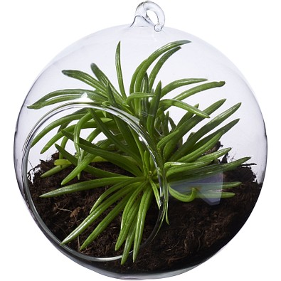SEASONS Terrarium Sphere, transparent klar
